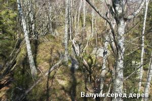 Валуни каньйону серед дерев