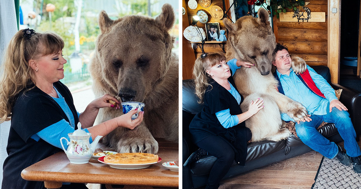 Russian Couple Adopted An Orphaned Bear 23 Years Ago, And They Still Live Together