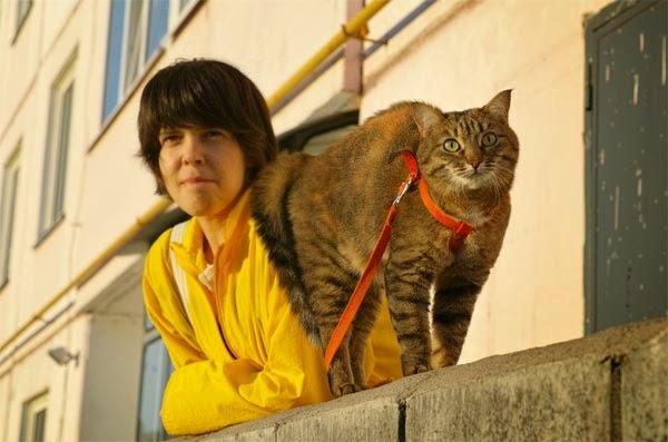кошка при виде собаки