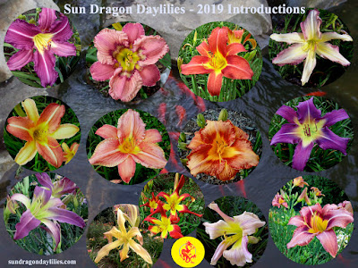 https://daylilybreeder.blogspot.com/2019/01/2019-daylily-introductions-released.html