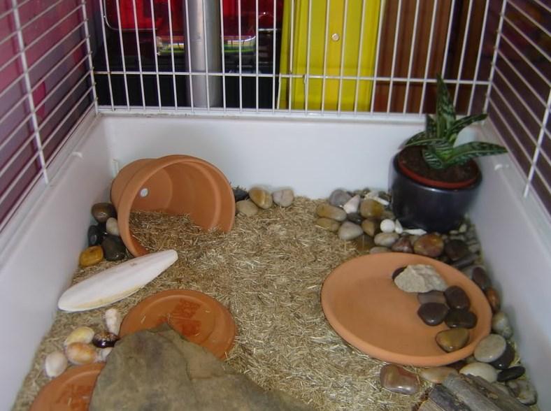 merawat kelinci di dalam rumah
