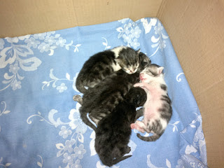gatito-recien-nacido-huerfano-cuidados