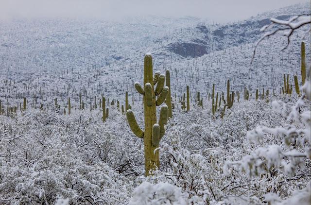 Απίστευτο: Χιόνισε στην έρημο της Αριζόνα (βίντεο)