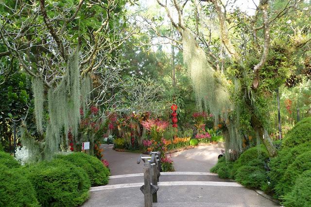 Egzotyczny ogród