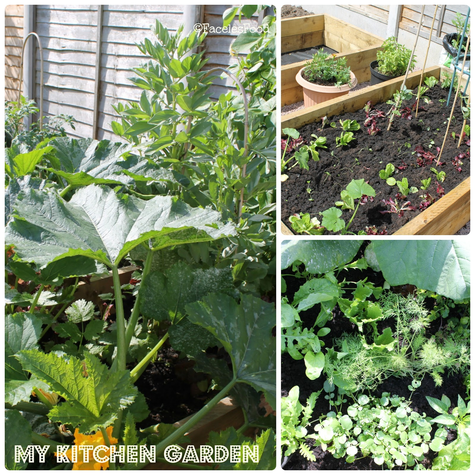 My Kitchen Garden We Dont Eat Anything With A Face My Kitchen Garden