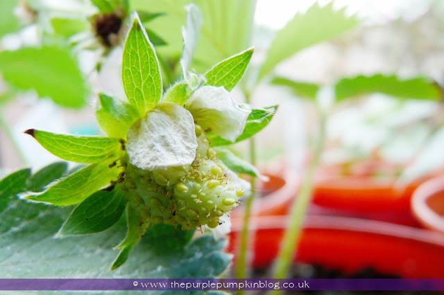 Grow Your Own Fruit & Veggies at The Purple Pumpkin Blog
