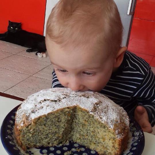 Ciasto cytrusowe z makiem