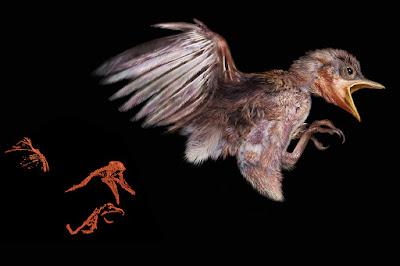 Pássaro de 100 milhões de anos é encontrado em âmbar