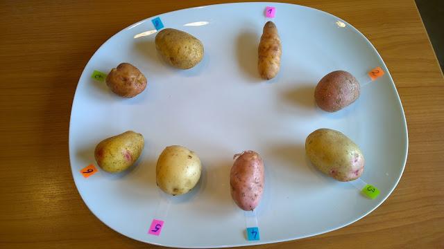die Test-Kartoffelsorten (c) by Joachim Wenk