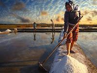 Akibat Import, Garam Petani Cirebon tak Laku Meski Dijual Hanya Rp 650 per Kg