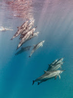 http://www.tropicallight.com/water/dolphins/11nov14dolphins/11nov14dolphins.html