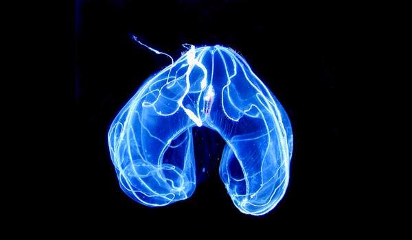 Bioluminescência, Função da Bioluminescência
