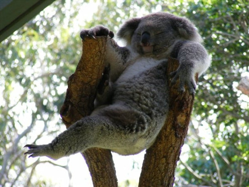 All FunnyCuteCool and Amazing Animals Funny Koala