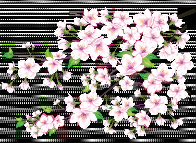 [Resim: PNG-Guel-Cicek-Resimleri-Part8-N%2B%285%29.png]