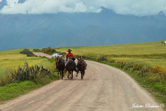 Paso peruano, Vallée Sacrée, Perou