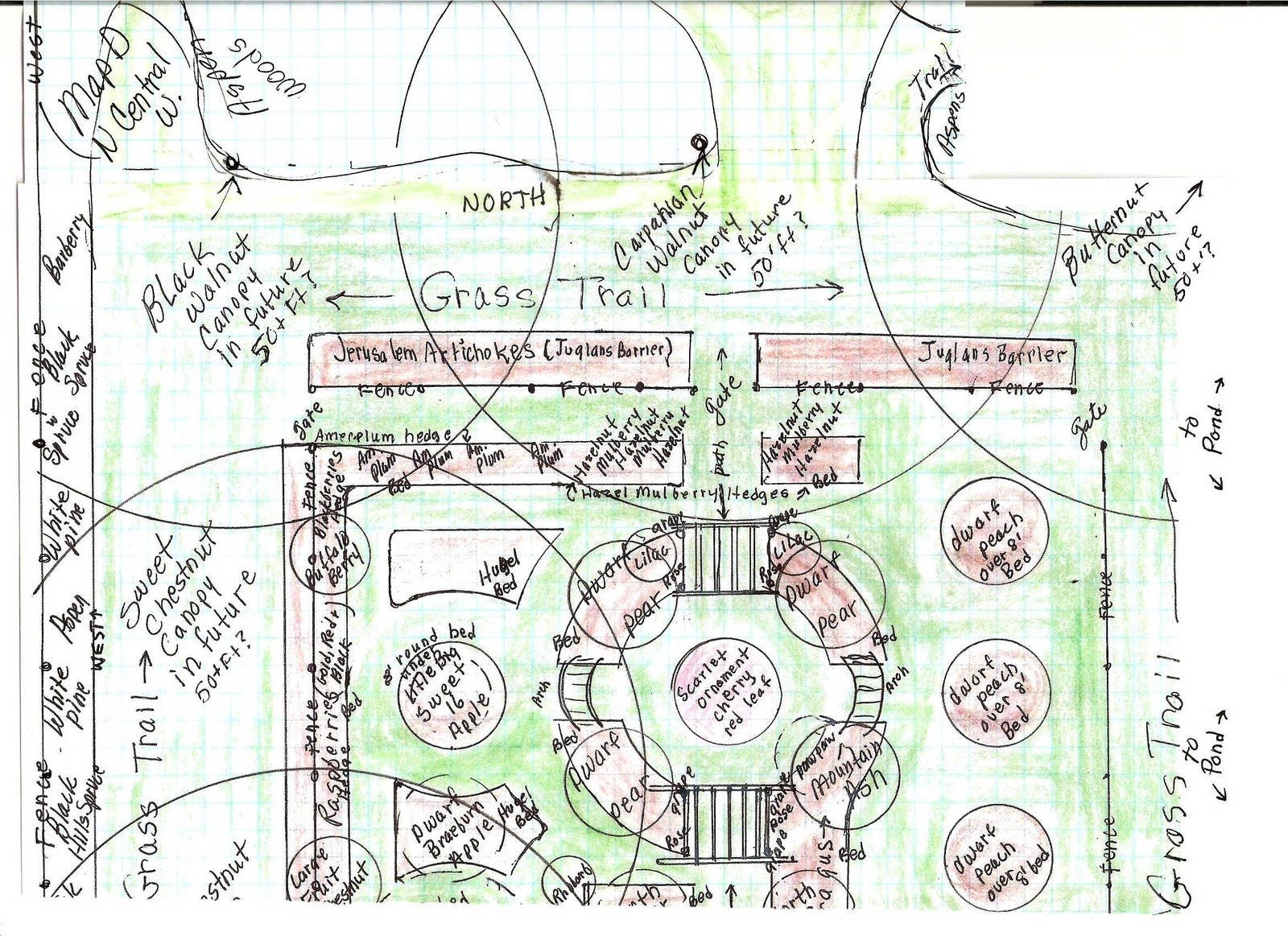 forest canopy diagram 220 sub panel wiring restful trails food garden gardens