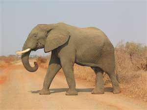 أنماط التنقل عند الحيوانات