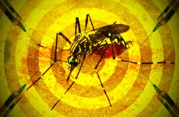 Febre amarela: sem correria