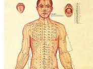Fenomena Organ Tubuh Manusia