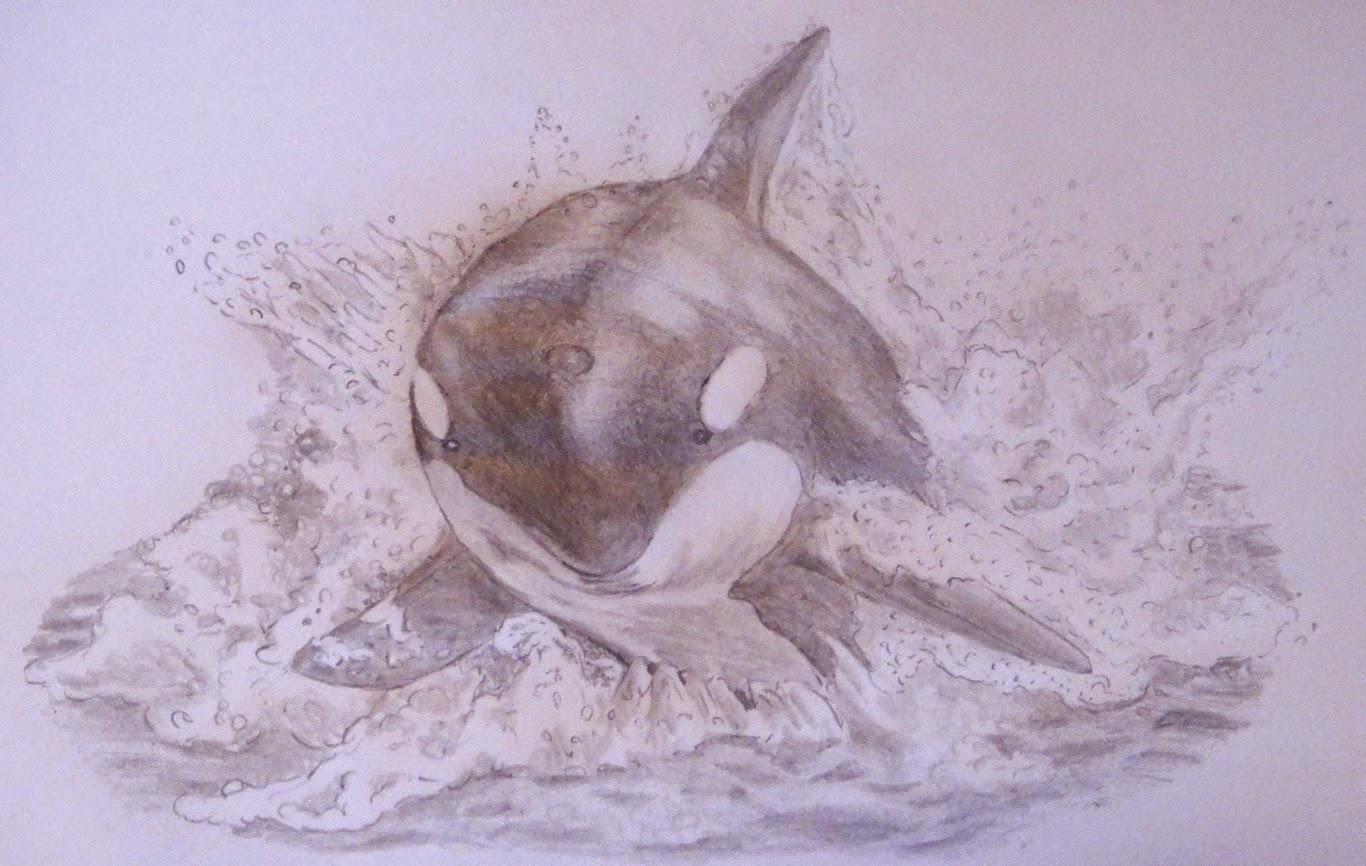 Achtung Wild Immer Tierisch Was Los Let S Draw Orca