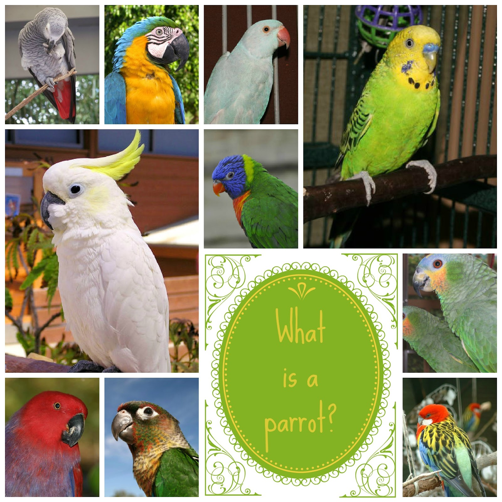 what makes a parrot a parrot pawsitively pets