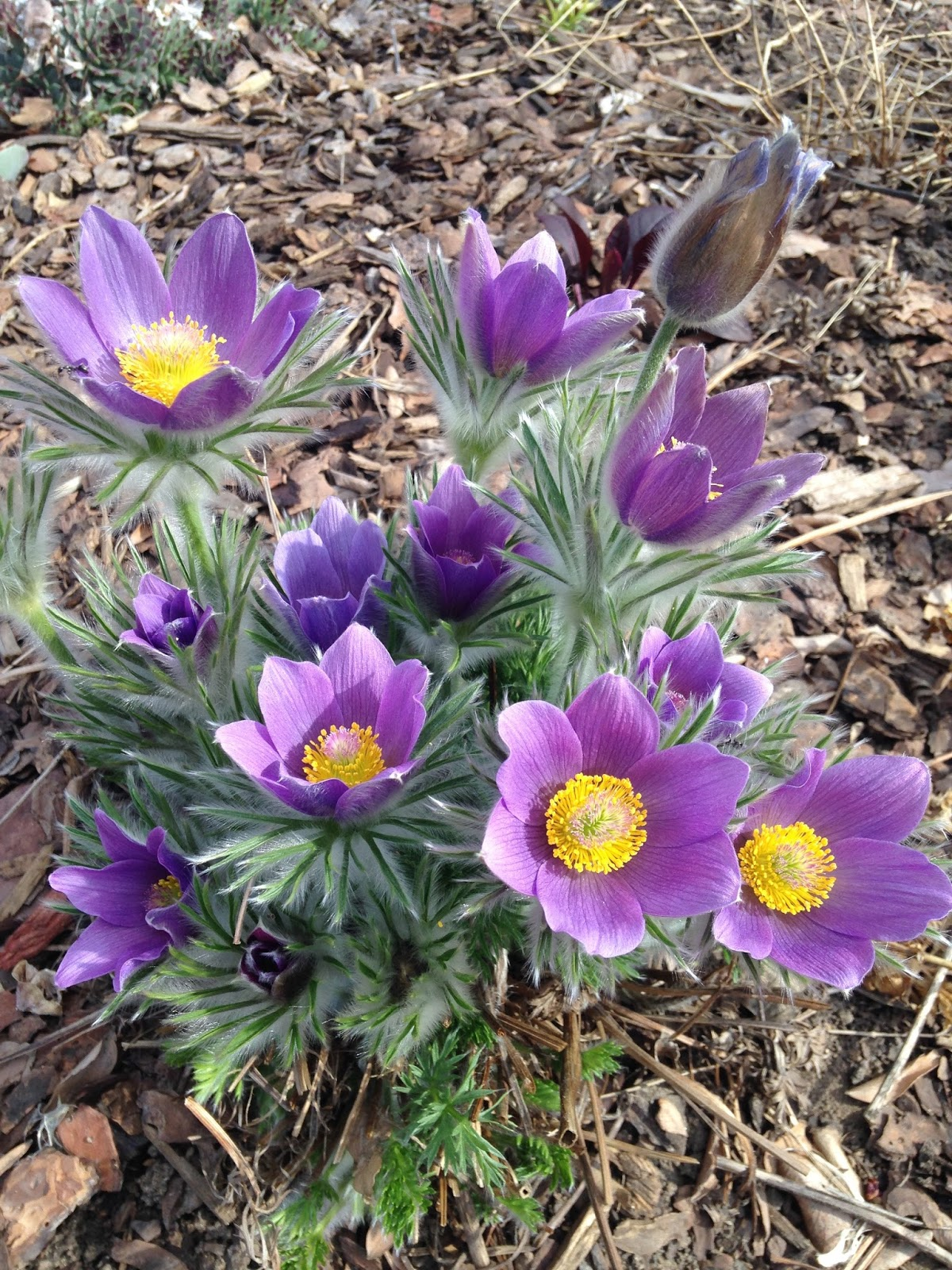 Landscaping With Colorado Native Plants Conference