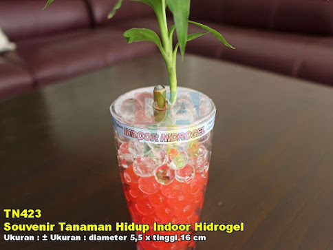 Souvenir Tanaman Hidup Indoor Hidrogel