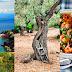 """""""ΠΗΛΙΟ - ΜΙΑ ΤΕΛΕΙΑ ΓΩΝΙΑ ΤΗΣ ΕΛΛΑΔΑΣ"""" ΓΡΑΦΕΙ ΤΟ CONDE NAST TRAVELER - Pelion a perfect corner of Greece"""