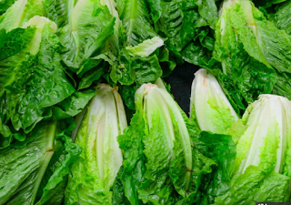 Romaine  lettuce is not safe to eat | CDC has warned American consumers