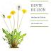 DENTE DE LEÓN: herbas de Galicia