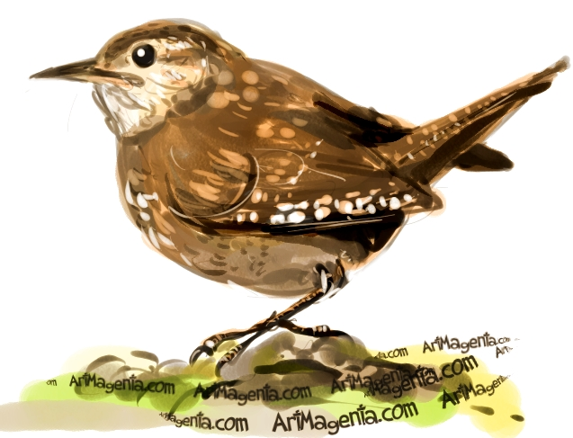 House Wren sketch painting. Bird art drawing by illustrator Artmagenta