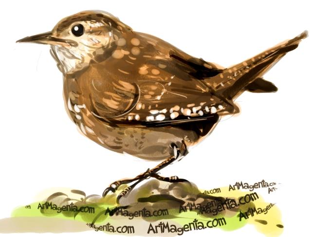 House Wren sketch painting. Bird art drawing by illustrator Artmagenta