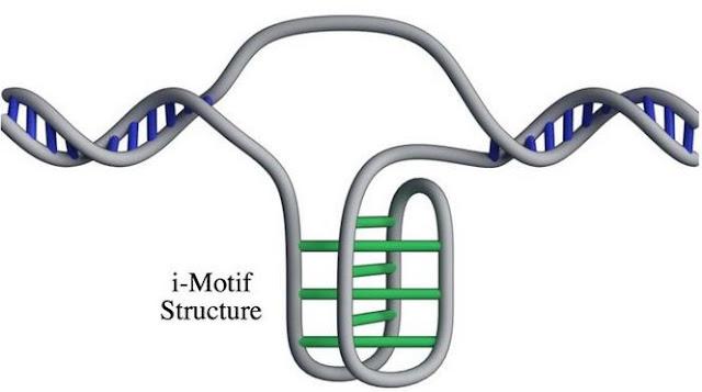 Дослідники виявили нову структуру ДНК всередині людських клітин