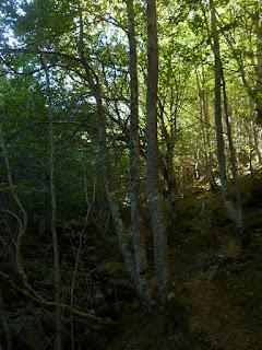 Hayedo del Valle Urbión