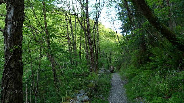 Bosque del Arroyo de la Salgueira - Ruta del Agua
