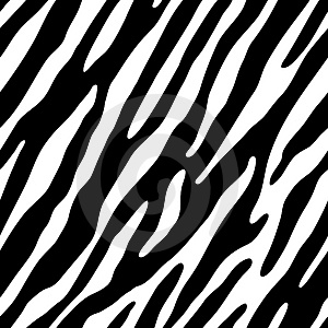 desktop wallpaper images of black and white zebra wallpaper for