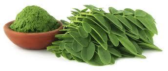 فوائد عشب المورينجا للصحه وقيمته الغذائيه