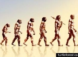 EVOLUTION HUMAN