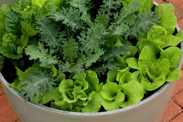 growing a salad bowl