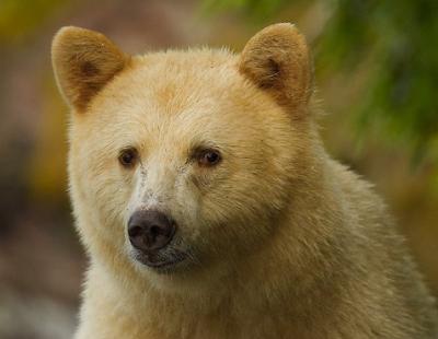 The Spirit Bear Adventure Travel
