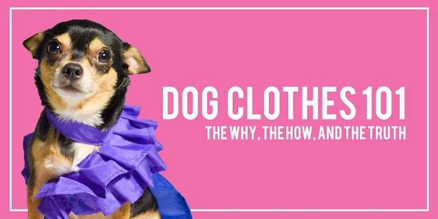 Dog Clothes 101: The Why, The How, and The Truth