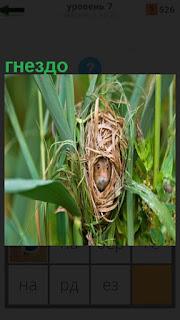 Среди высокой травы имеется гнездо, в котором находится грызун