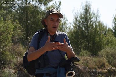 http://www.biodiversidadvirtual.org/insectarium/Participantes-Testing-Punto-BV-Espacio-Pirineos-Graus-9-5-2015-img691429.html