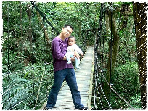 大板根森林遊樂區|三峽大板根