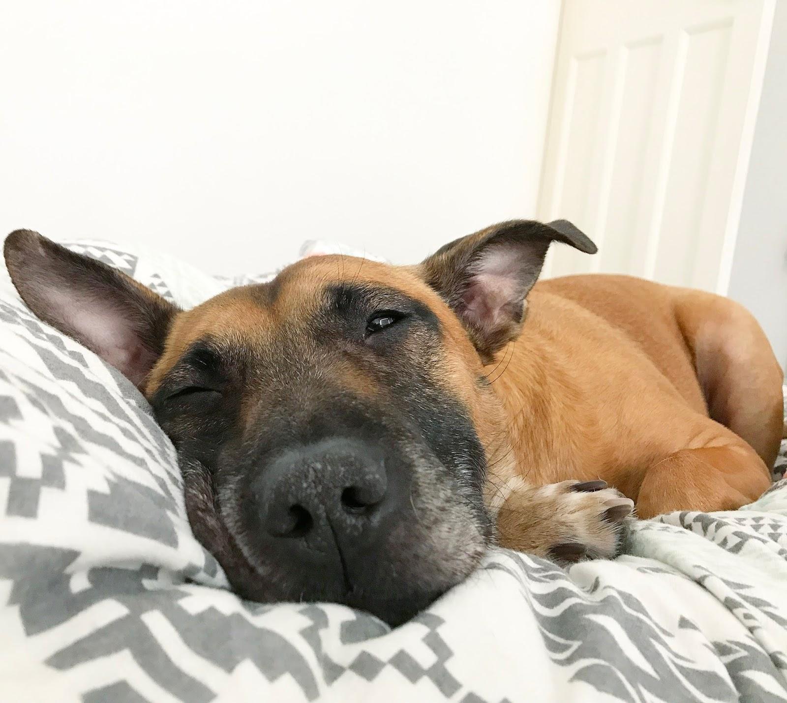 dog, zen, relax,