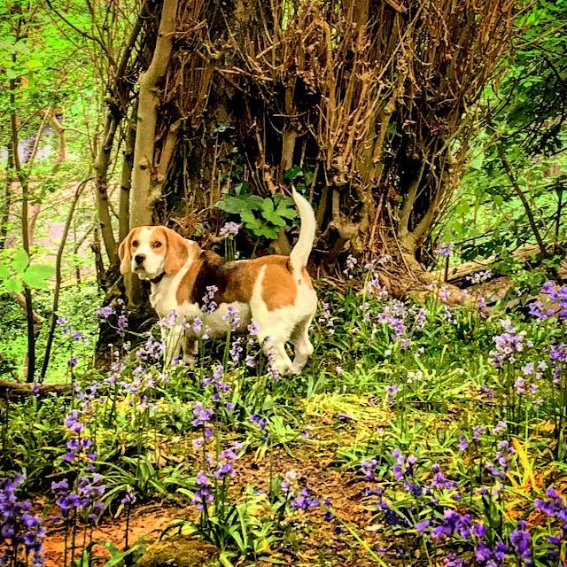 First Dates, always start with a good dog walk