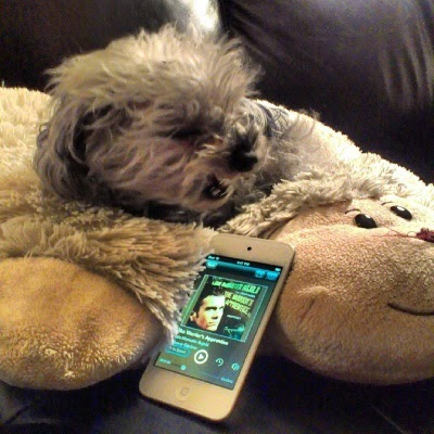 Murchie yawns, or maybe roars, while laying on a sheep-shaped pillow in front of a white iPod with The Warrior's Apprentice's cover art on its screen. The cover is an angled portrait of a pale-skinned man with short brown hair.