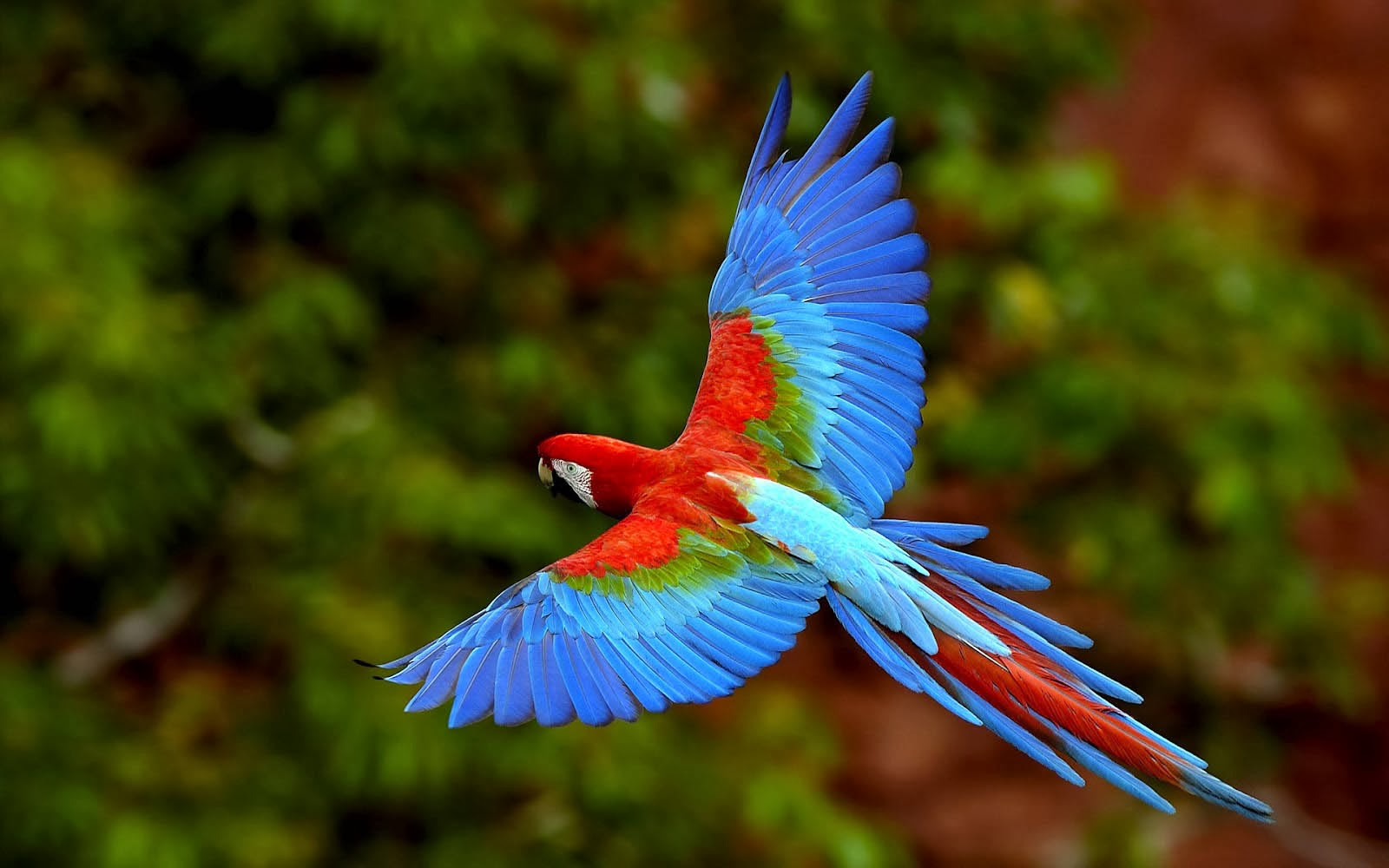 King Of Cars >> wallpapers: Parrots Wallpapers