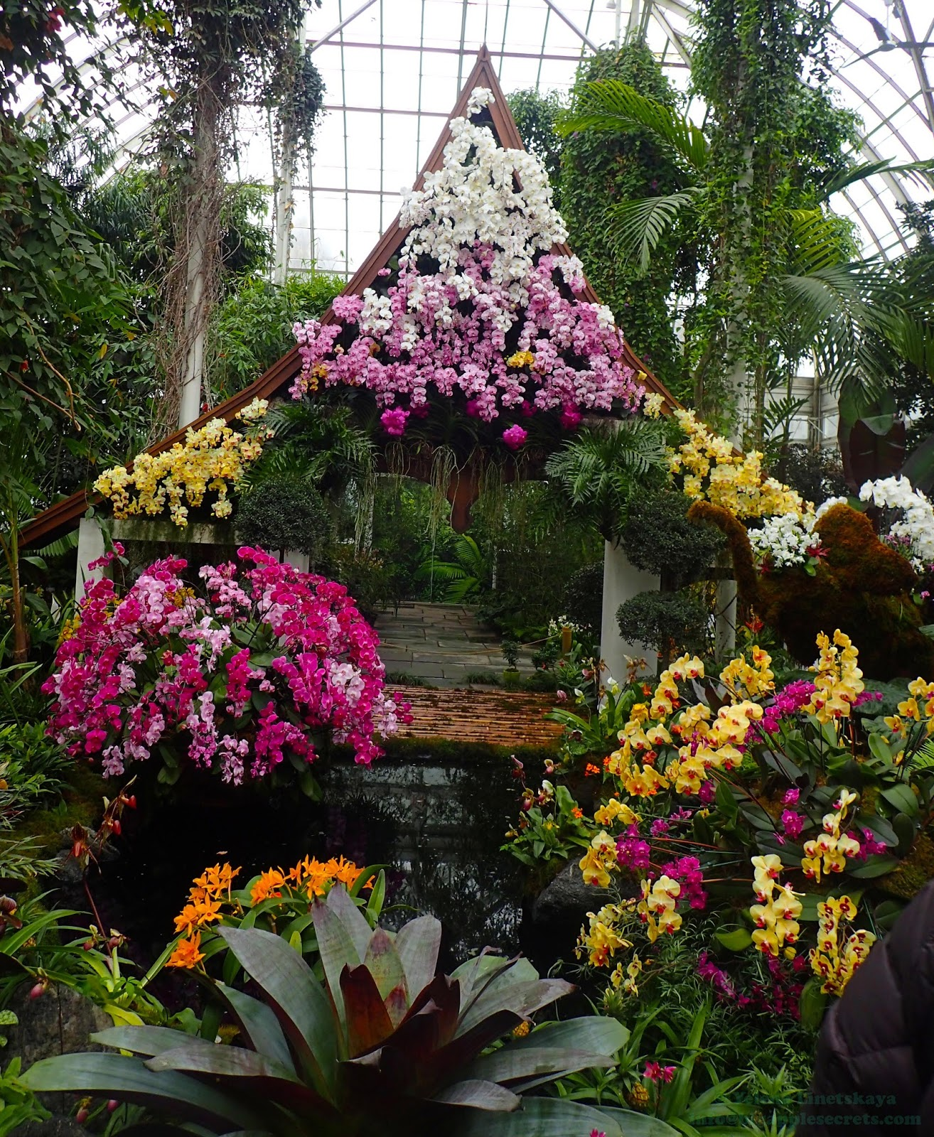 Big Apple Secrets Orchids From Thailand In New York
