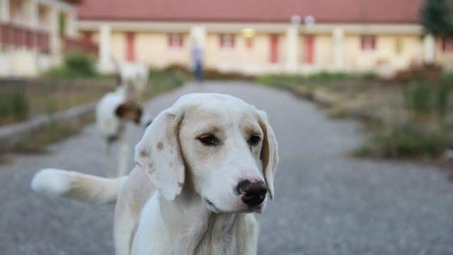 Πυροβόλησαν και σκότωσαν αδέσποτο σκυλάκι στο Μεσολόγγι
